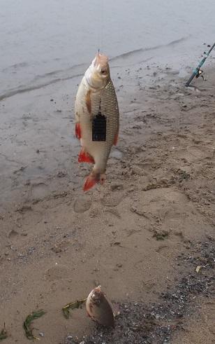 http://forum.tatfish.com/download/file.php?id=22501&mode=view/DSCF9827.jpg
